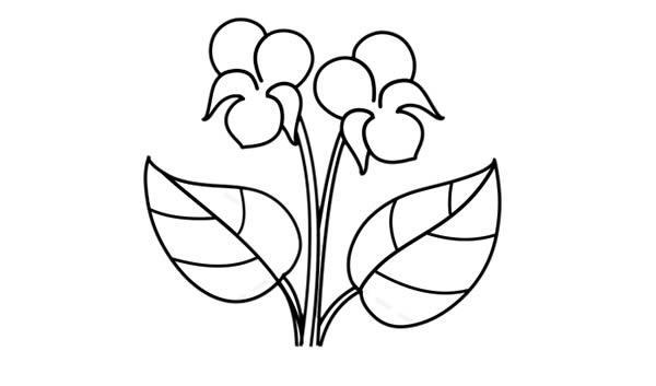 紫罗兰盆栽简笔画彩色画法步骤图片 中级简笔画教程-第5张