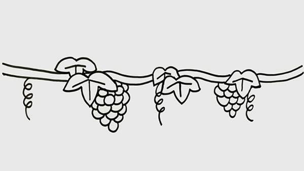 葡萄树简笔画画法步骤 初级简笔画教程-第4张
