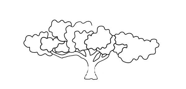 茂盛大树简笔画彩色画法图片 中级简笔画教程-第4张