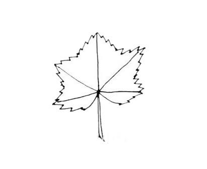 枫叶简笔画,秋天的叶子简笔画 植物-第5张