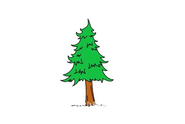儿童简笔画松树画法步骤图 中级简笔画教程-第1张