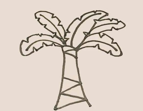 芭蕉树简笔画的画法步骤图教程 中级简笔画教程-第8张