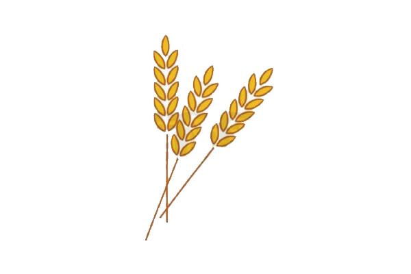 麦穗简笔画,小麦简笔画怎么画 中级简笔画教程-第5张