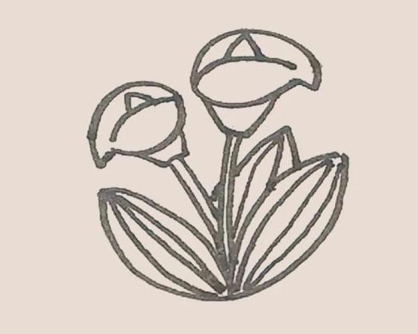 马蹄莲植物简笔画 中级简笔画教程-第7张