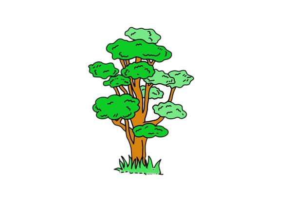 彩色柞树简笔画的画法步骤教程 中级简笔画教程-第1张