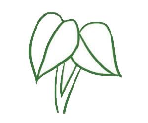 绿萝简笔画画法,绿色植物简笔画 中级简笔画教程-第4张