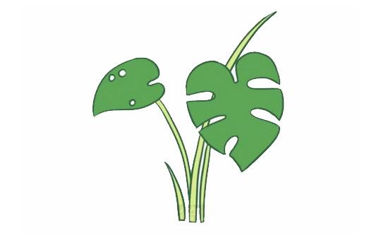 龟背竹简笔画,绿色植物儿童简笔画 初级简笔画教程-第1张