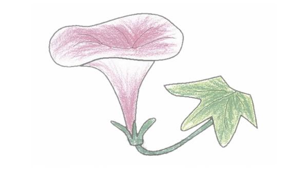 牵牛花简笔画的画法步骤图教程 植物-第1张