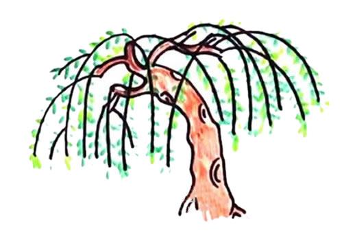 春天的柳树画法步骤 中级简笔画教程-第1张