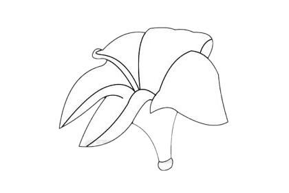 鸡蛋花分步骤简笔画画法 初级简笔画教程-第9张
