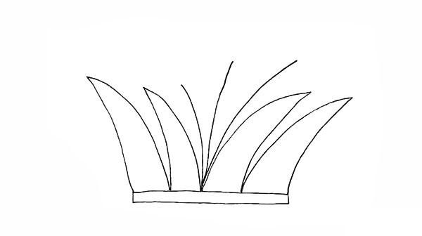 画法步骤芦苇 芦苇简笔画彩色画法步骤教程 植物-第5张