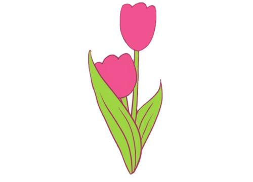 郁金香简笔画,花朵简笔画大全 初级简笔画教程-第9张