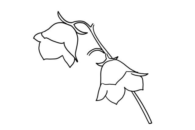 彩色花朵简笔画画法教程 中级简笔画教程-第5张