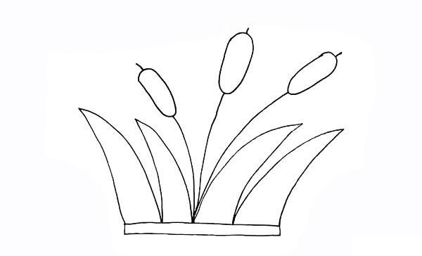 画法步骤芦苇 芦苇简笔画彩色画法步骤教程 植物-第7张