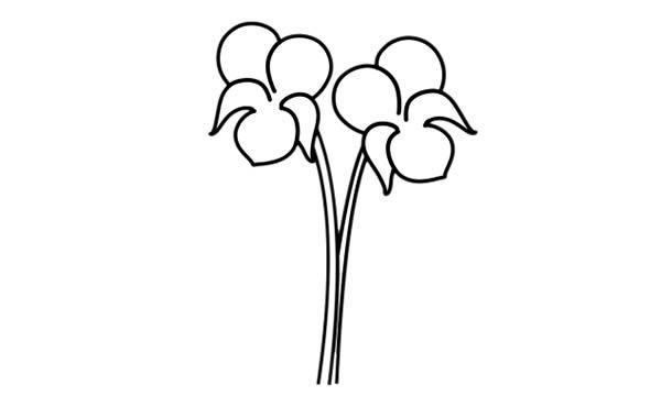 紫罗兰盆栽简笔画彩色画法步骤图片 中级简笔画教程-第4张