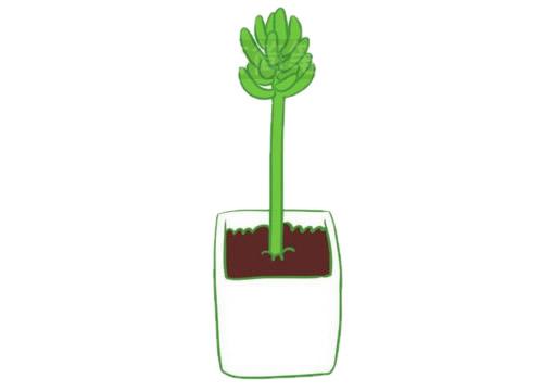 多肉植物简笔画分步骤画法 中级简笔画教程-第10张