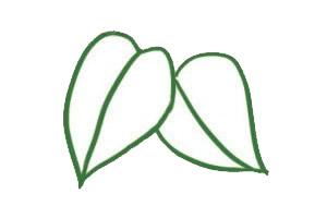 绿萝简笔画画法,绿色植物简笔画 中级简笔画教程-第3张