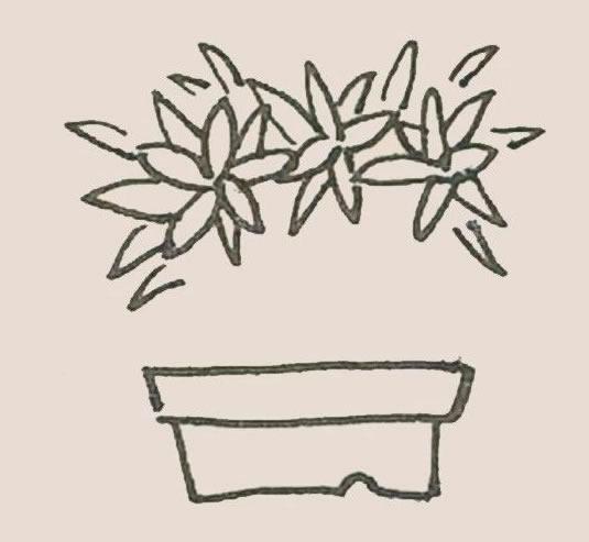 盆栽简笔画彩色画法步骤图解教程 初级简笔画教程-第4张