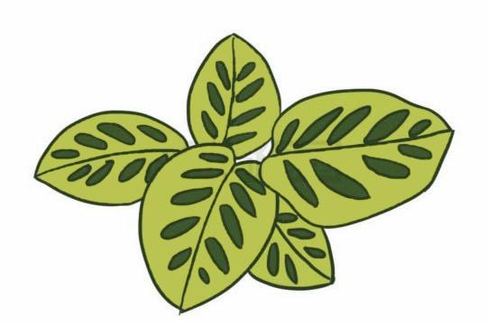 绿色植物儿童简笔画教程 初级简笔画教程-第8张