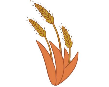 麦穗简笔画,小麦简笔画怎么画 中级简笔画教程-第8张