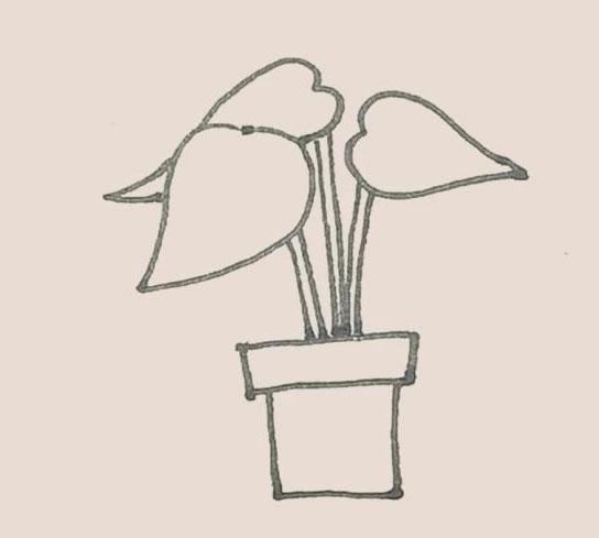 盆栽植物简笔画画法步骤图 初级简笔画教程-第5张