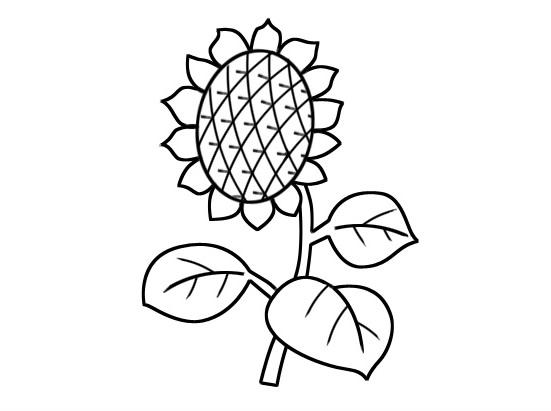 少儿简笔画向日葵图片 植物-第1张
