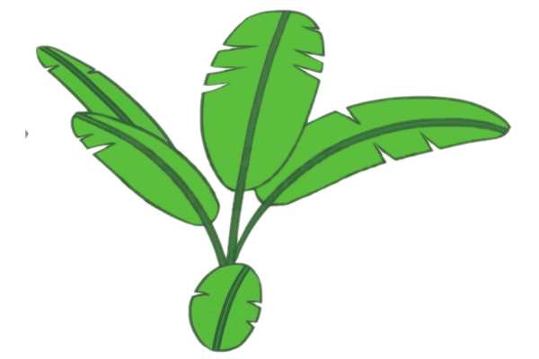 彩色芭蕉树简笔画的画法 初级简笔画教程-第5张