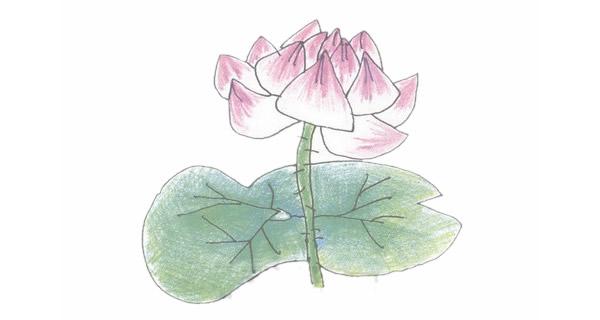 荷花简笔画的画法步骤图教程 植物-第1张