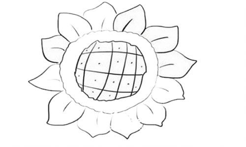 向日葵简笔画步骤图解教程 植物-第5张