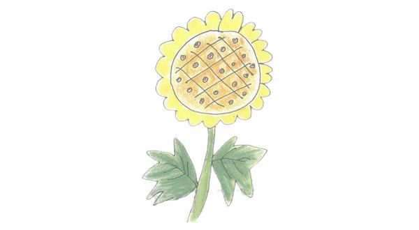 向日葵简笔画的画法步骤图教程 植物-第1张