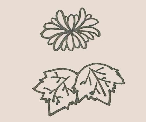 菊花简笔画画法步骤图 中级简笔画教程-第9张
