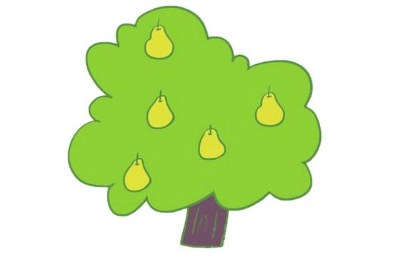 果树简笔画的画法步骤图解教程及图片大全 植物-第7张