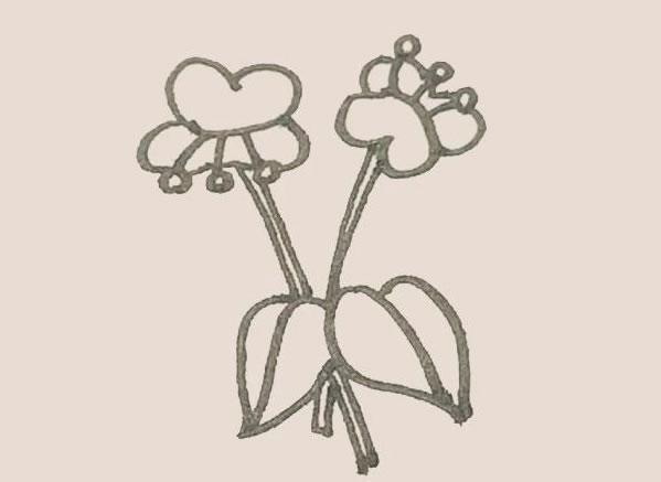 蝴蝶兰花朵简笔画的画法 中级简笔画教程-第9张