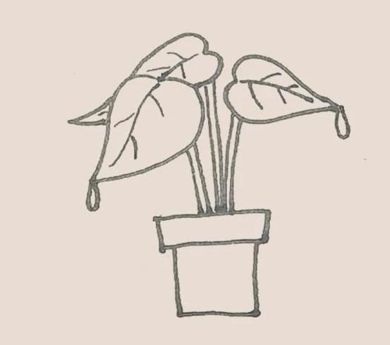 盆栽植物简笔画画法步骤图 初级简笔画教程-第6张