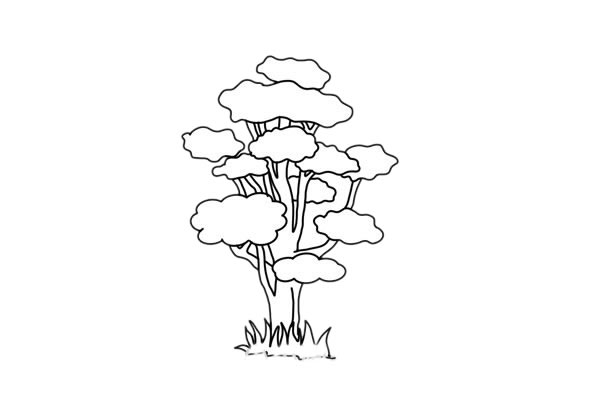 彩色柞树简笔画的画法步骤教程 中级简笔画教程-第6张