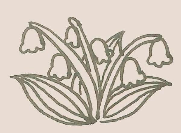 铃兰花简笔画,铃兰花画法教程 中级简笔画教程-第7张