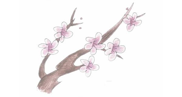梅花简笔画的画法步骤图教程 中级简笔画教程-第1张