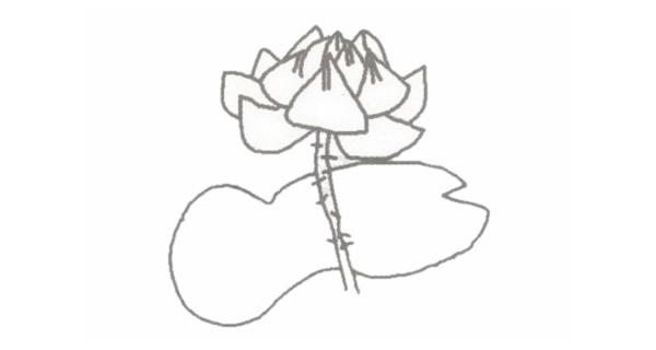 荷花简笔画的画法步骤图教程 植物-第3张