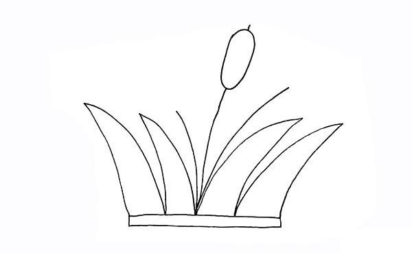 画法步骤芦苇 芦苇简笔画彩色画法步骤教程 植物-第6张