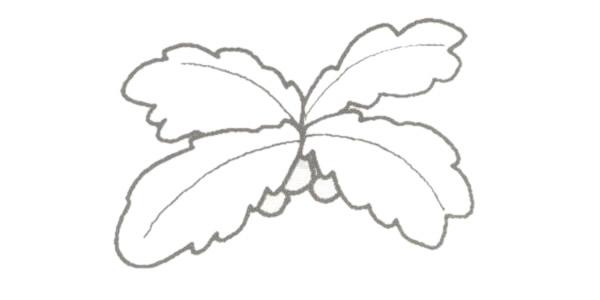 椰子树简笔画的画法步骤图教程 植物-第3张