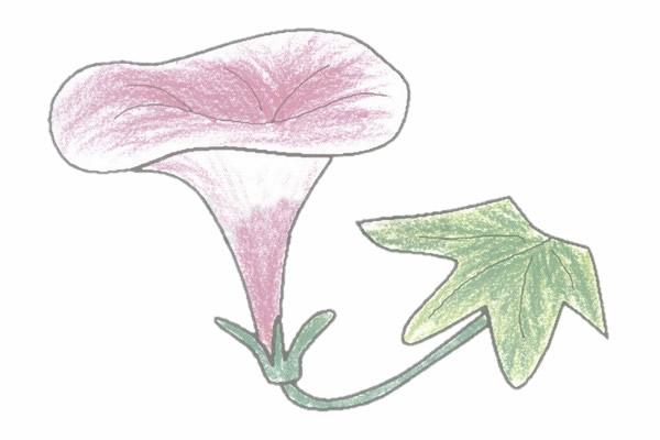 牵牛花简笔画的画法步骤图教程 植物-第5张