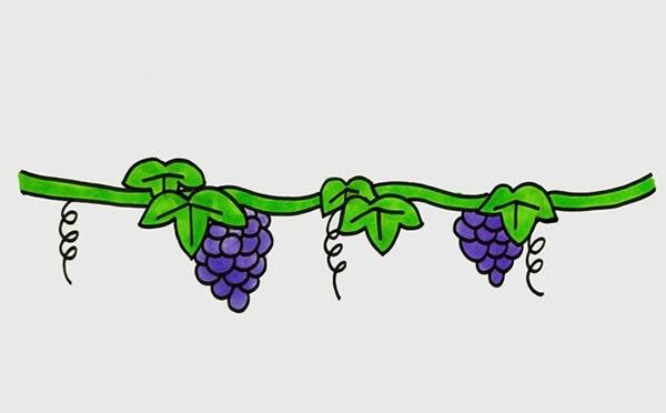 葡萄树简笔画画法步骤 初级简笔画教程-第1张
