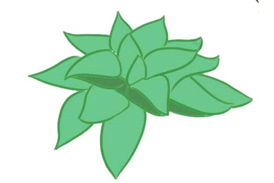 多肉植物简笔画分步骤画法 中级简笔画教程-第11张