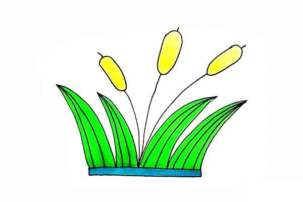画法步骤芦苇 芦苇简笔画彩色画法步骤教程 植物-第1张