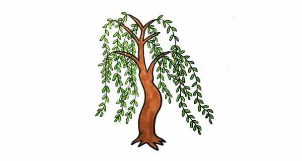 柳树画法步骤,柳树彩色画法 中级简笔画教程-第1张