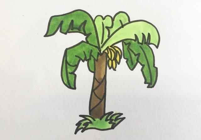 香蕉树的简单画法 中级简笔画教程-第1张
