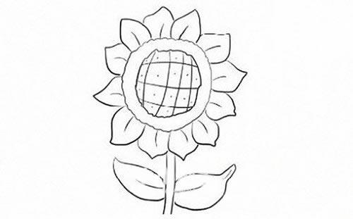 向日葵简笔画步骤图解教程 植物-第1张