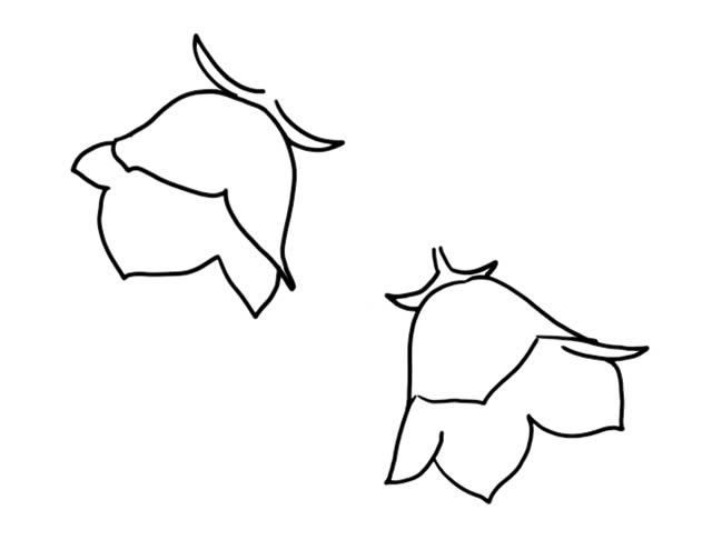 彩色花朵简笔画画法教程 中级简笔画教程-第4张