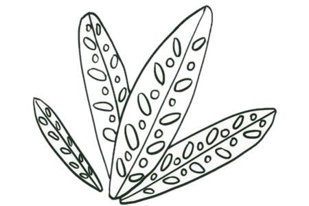 绿色植物儿童简笔画教程 初级简笔画教程-第5张