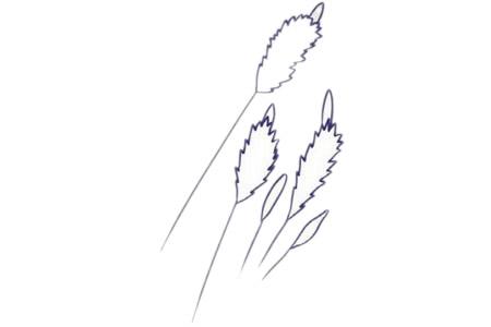 儿童简笔画薰衣草彩色画法 中级简笔画教程-第5张